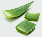 Ingrediente Aloe